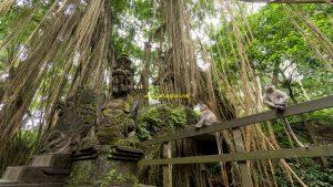 Hutan Monyet Ubud