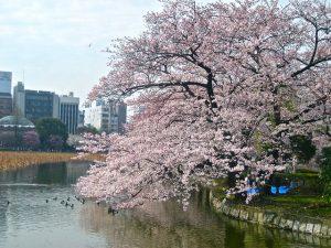 Musim Terbaik untuk Wisata ke Tokyo Japan