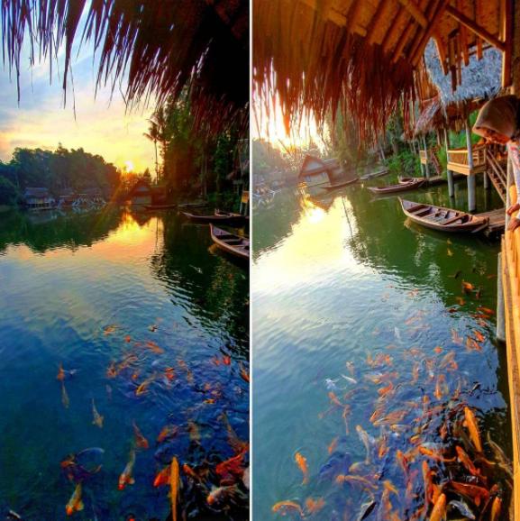 ikan berwarna warni di kampung sampireun